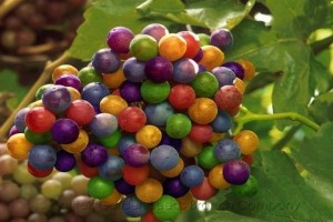 Wild & Crazy Grapes!